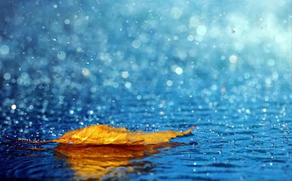 air-hujan-biru-daun-kuning-emas