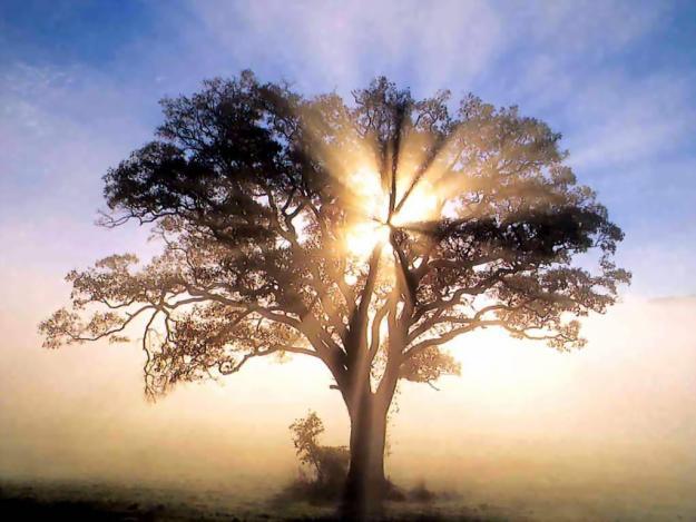 Light-through-tree