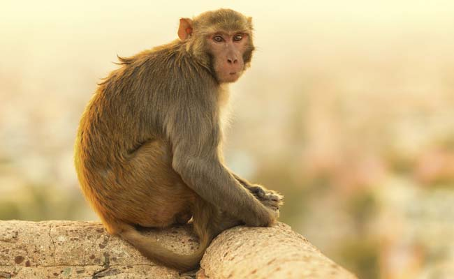 monkey-650-generic-thinkstock_650x400_41427714356
