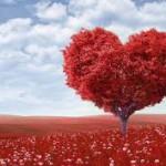 OPINI - Cinta dalam Pandangan Syaikh Yusuf Makassari