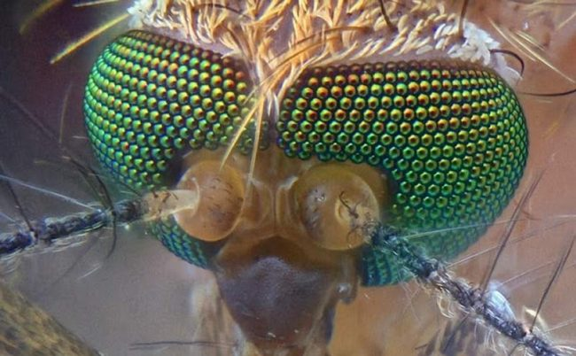 ketika-allah-tak-segan-membuat-perumpamaan-seekor-nyamuk