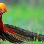 TASAWUF - Tiga Nasihat Sang Burung