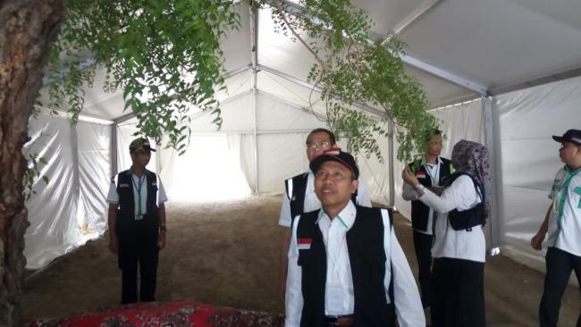 Pohon Soekarno Banyak Tumbuh Di Padang Arafah