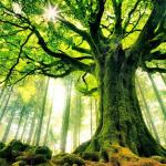 HIKMAH – Hikayat Pohon Cantik