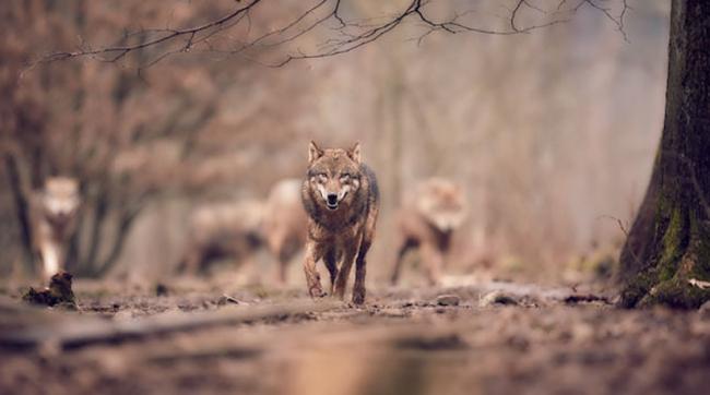 Dunia Politik dan Serigala Agama