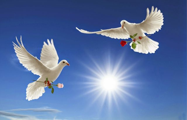 two-birds-wallpaper-love-and-peace-full-hd
