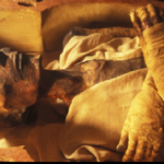 Museum Mesir Hapus Kata 'Israel' dari Artefak Firaun Pengejar Nabi Musa