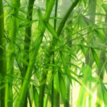 Ngelmu Pring: Belajar Ilmu Bambu ala Masyarakat Jawa